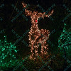 A reindeer is made up of lights at the St. Louis Zoo Wildlights holiday celebration.