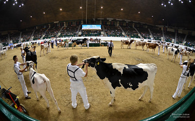 When Kids and Cows Rule The Coliseum ©Debra Fisher Goldstein-1194