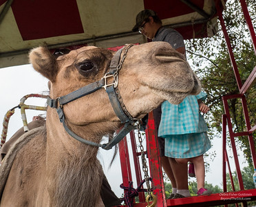 Josephine, almost 4, contemplates her ride.