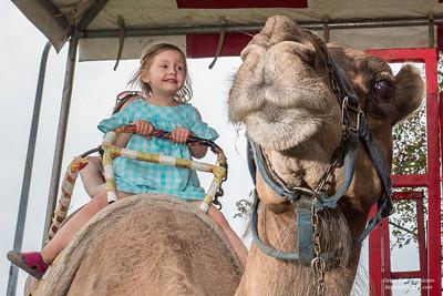 Camel Back _Washington County Fair