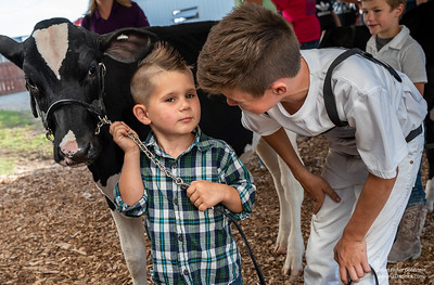 """Music To My Ears"" Preparing to enter the ring for the Novice class, older brother Jaden, 11, gives Nash, 4, some advice on handling his calf, ""Music."""