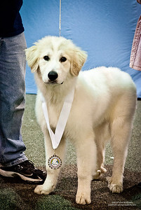 Great Pyrs and Peers-4