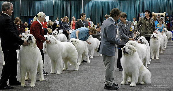 Great Pyrs and Peers-3
