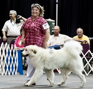 Great Pyrs and Peers-453