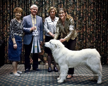 Puppy Invitational Awards-4520