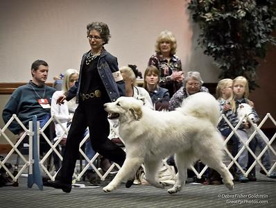 e-CD Gallery 6 - Git Along L'il Doggies - Puppy Invitational