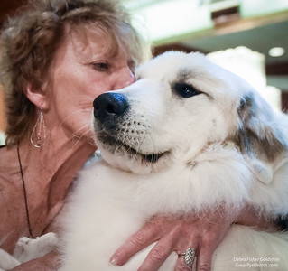 Great Pyrenees  Nationals: My Gentle Giant Friends And Clients