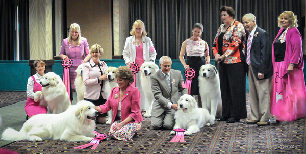 And raised money for cancer research for canines and those who love them.