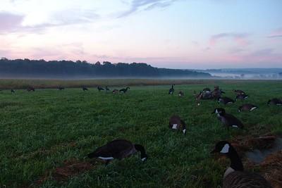 Goose Hunting 2004