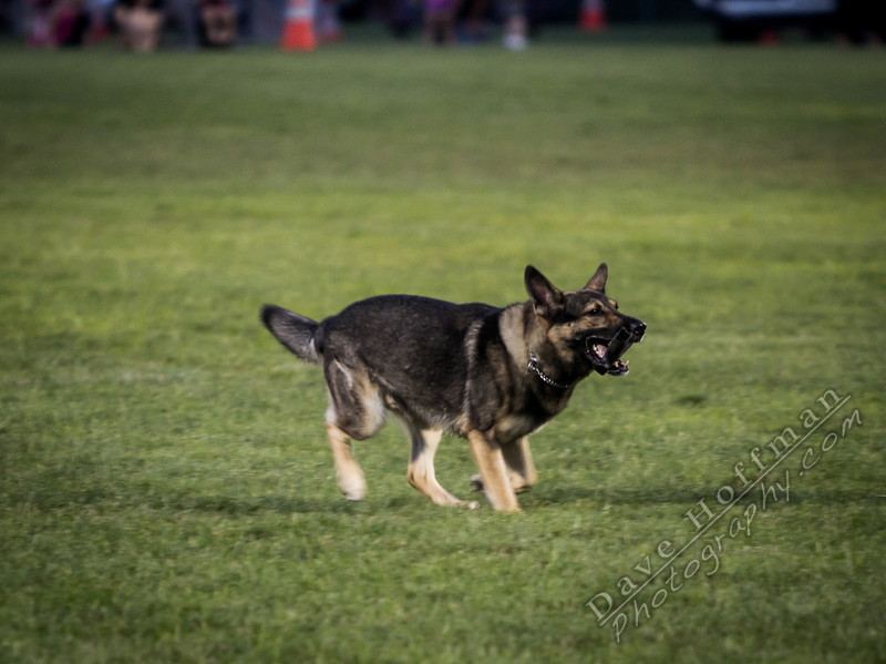 K-9 Demo for Jacob Myers-9828