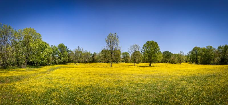 Yellow Fields in Hendersonville - May 9, 2020