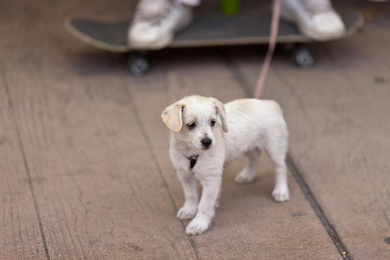 Cute puppy; Main Street, Pendleton