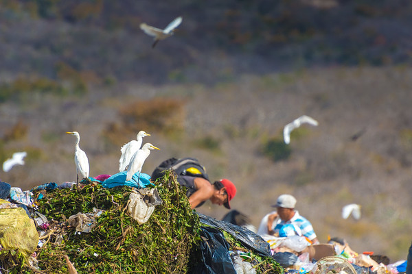 The most surprising thing about the dump, to me, was the birds. They were everywhere; these white ones, which I have not yet identified, and buzzards.