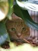 Pet Camp Cat Safari