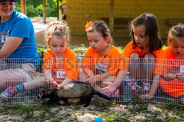 Summer education intern Morgan Blake looks on as campers Kinsley Boles (left), Ryann Paine and Indiana Anderson reach out to pet Buddy the ferret through a wire fence during Zoo Camp Friday at Caldwell Zoo in Tyler.   (Cara Campbell/Tyler Morning Telegraph)