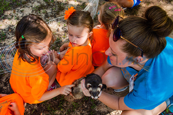 Camper Indiana Anderson (left) gives Buddy the ferret a pet on the back as fellow camper Ryann Paine and Education Specialist Kayle Dossett look on during an animal encounter at Zoo Camp Friday at Caldwell Zoo in Tyler.