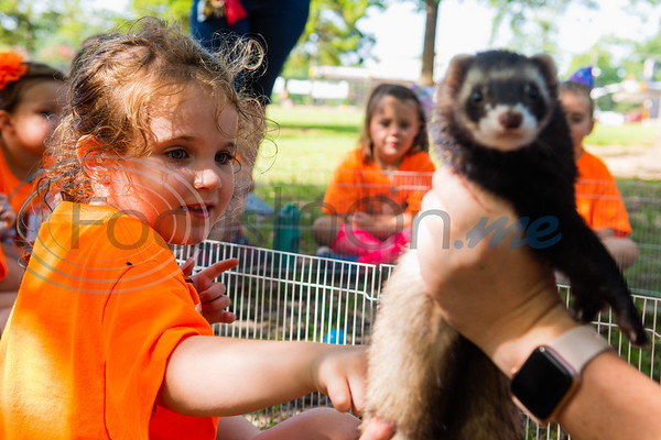 Camper Caroline Van Leeuwen reaches out to pet Buddy the ferret during an animal encounter session at Zoo Camp Friday at Caldwell Zoo in Tyler.