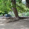 Jahrhunderte alter Baumbewuchs bei Rancho el Bosque - Tag 2