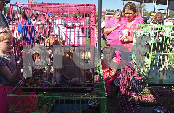 """People check out dogs for adoption through the MuttNation Foundation during Pinktoberfest, hosted by The Cannery Lindale, The Pink Pistol, Love and War in Texas and the City of Lindale Oct. 22, 2016 in Lindale. The event, dubbed, a """"Texas Size Block Party"""" featured games, live music, a chili cook-off and MuttNation Foundation pet adoption. Pinktoberfest also served as the official grand opening of Love and War in Texas and The Pink Pistol.   (Sarah A. Miller/Tyler Morning Telegraph)"""