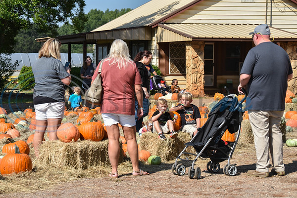 Families enjoy a pumpkin patch at Joe Smith Farms for their 11th Annual Family Fun Day. The free event took place on Saturday, October 5 and included a petting zoo, food, games and train rides. (Jessica T. Payne/Tyler Morning Telegraph)