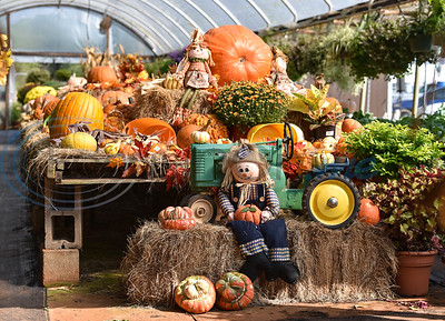 Fall decorations are on display in a greenhouse at Joe Smith Plant Farms for their Annual Family Fun Day on Saturday, October 5. This year marks the events 11th year. (Jessica T. Payne/Tyler Morning Telegraph)