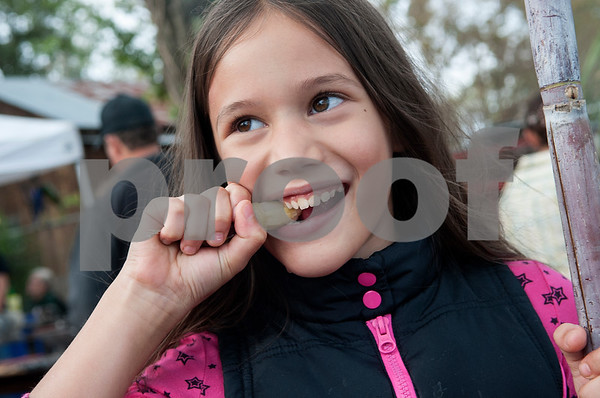 Jewel McCullough, 8, of Jacksonville chews on a piece of ribbon cane at the annual Heritage Syrup Festival Saturday Nov. 14, 2015 in Henderson, Texas. The celebrates the tradition of ribbon cane syrup and features a syrup making demonstration utilizing the Depot Museum's antique mule powered equipment. The festival also features basket weaving,  blacksmithing, folk singers, vendors and square dancing.  (Sarah A. Miller/Tyler Morning Telegraph)