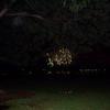 Fireworks on 12/31/08 at Waikiki beach.