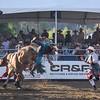 Bull Rider 4 11x14