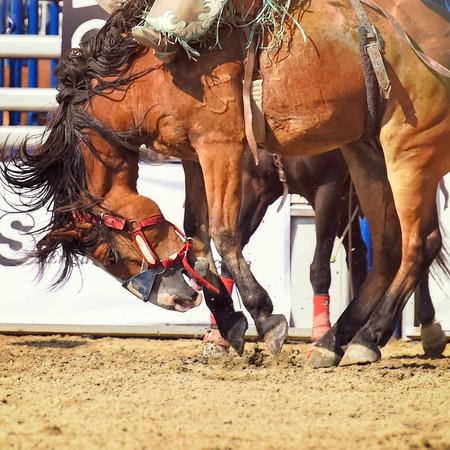 15th Annual Rancho Mission Viejo Rodeo 2015