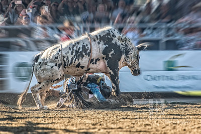 Bull Rider 1