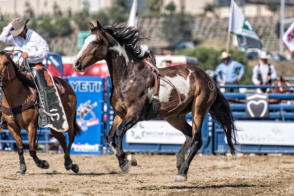 Free Horse Final_DSC3160 copy