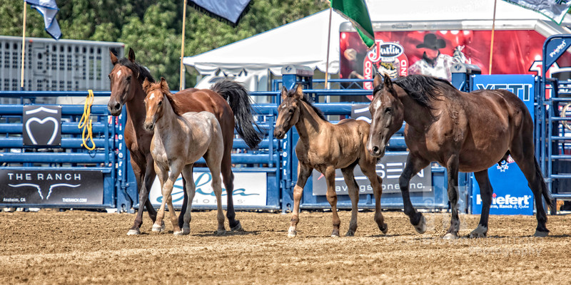 Horses Running Final 2