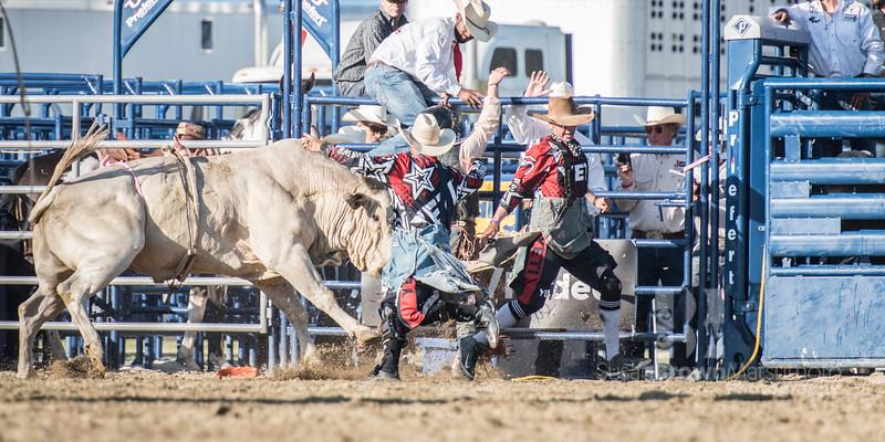 Bull 6 20x10_DSC4480