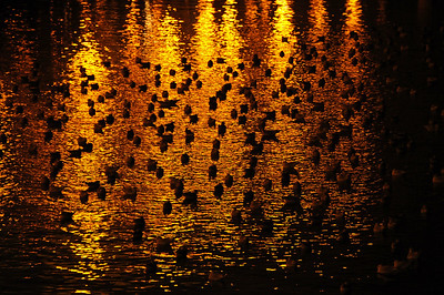 Sea gulls at night