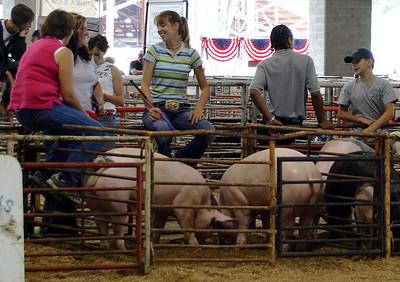 Talking About Swine %2833523463%29