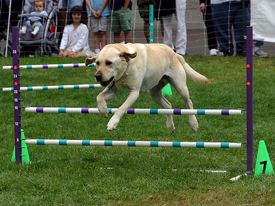 Dog Agility Group %2833523447%29