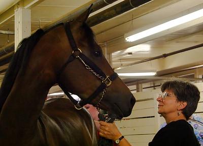 Horse Barn %2833523452%29