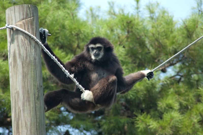 20040724 Gulf Breeze Zoo KidsFest 004