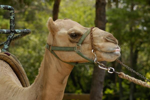 20040724 Gulf Breeze Zoo KidsFest 070
