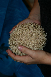 Gathering at Terrapin Hedgehogs (12/2004)  Gathering at Terrapin Hedgehogs (12/2004)  Filename reference: 20041213-011524-HAH-Gathering_at_Terrapin_Hedgehogs-SM