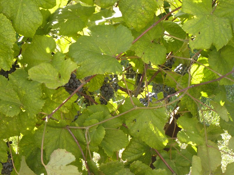winery 2005 021