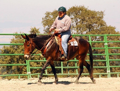 """Doug Jones rides his mule, """"Toby"""", in one of the Western Equitation classes."""