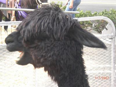 2007-07-07 Petting Zoo