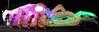 Disco Cuttlefish - Kevin Godfrey