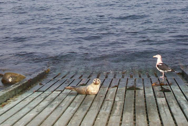 Friends come to Thacher Island.