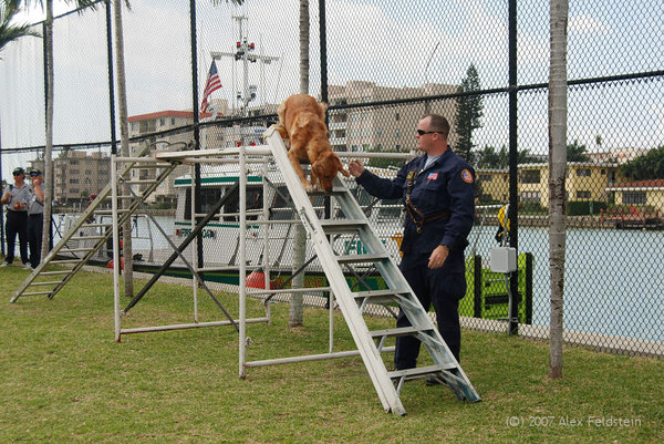 Rescue dog demo
