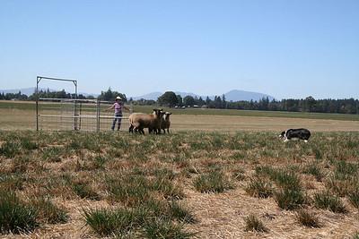 2007 Regional Sheep Dog Championships, Western States Finals