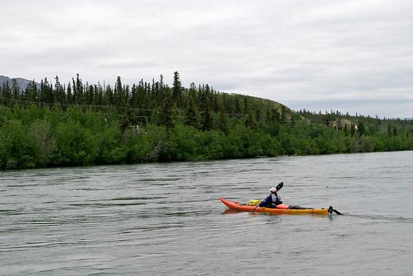 IMG_5443 Tiger YRQ test paddle