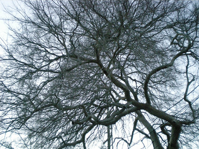 Nareg's artistic tree shot