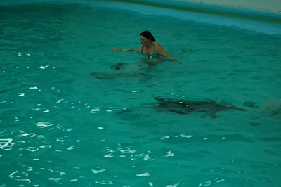 2008-08-27, Oxana swims with dolphins